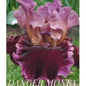 "Ирис ""DANGER MONEY"""